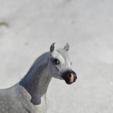 Арабская лошадь в смешанной технике